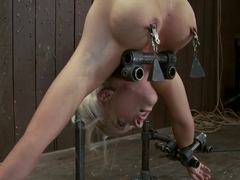 Holly Heart Former collegiate athlete upside down, butt plugged, and made to cum!