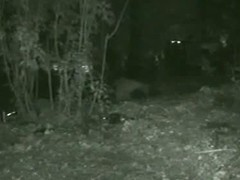 Skinny girl pissing in the woods caught on voyeur nightcam